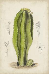 Antique Cactus VI by Curtis