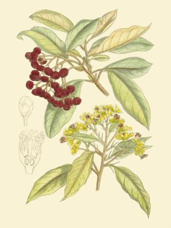 Berries & Blossoms I by Curtis