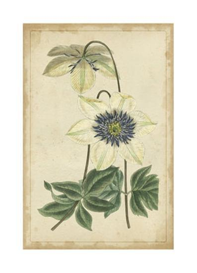 Curtis Blooms in White I--Art Print