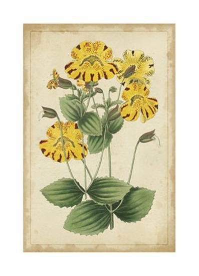 Curtis Blooms in Yellow I--Art Print