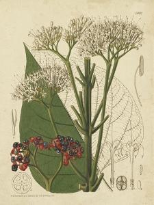 Curtis Leaves & Blooms II by Curtis