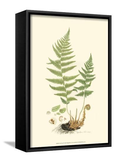 Curtis Ferns II-Samuel Curtis-Framed Canvas Print