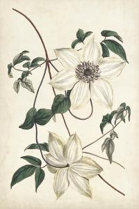 Ivory Garden II by Curtis