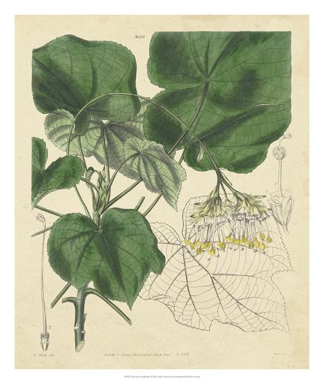 Curtis Leaves & Blooms I-Curtis-Giclee Print