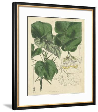 Curtis Leaves & Blooms I-Curtis-Framed Giclee Print