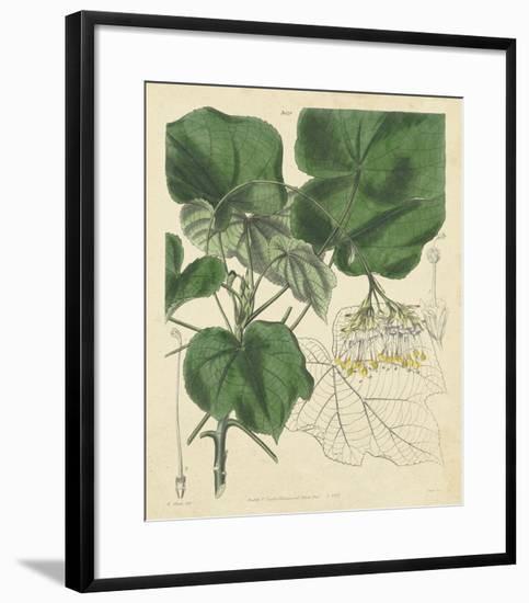 Curtis Leaves & Blooms I-Curtis-Framed Giclee Print