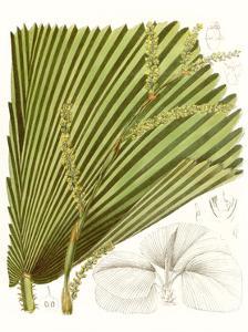 Palm Melange I by Curtis