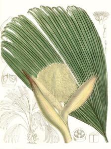 Palm Melange II by Curtis