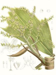 Palm Melange III by Curtis