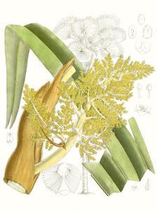 Palm Melange V by Curtis