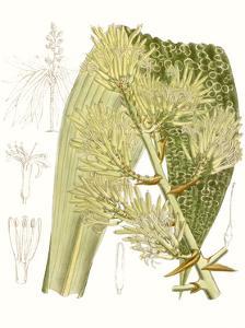 Palm Melange VI by Curtis