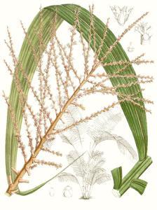 Palm Melange VII by Curtis