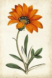 Tangerine Floral I by Curtis