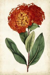 Tangerine Floral II by Curtis