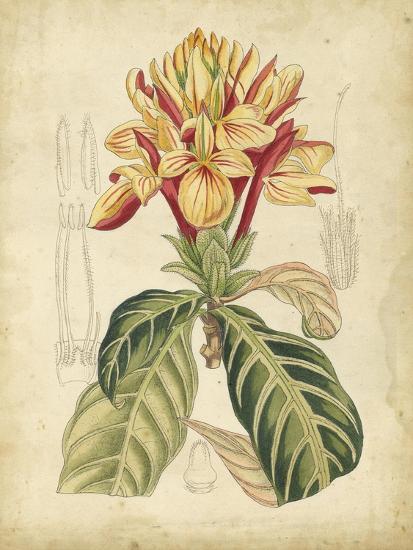 Curtis Tropical Blooms IV-Samuel Curtis-Art Print