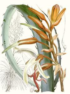 Tropical Variety III by Curtis