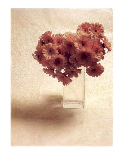 Cut Flowers IV-Vincenzo Ferrato-Art Print