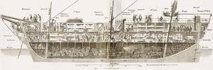 Cutaway of a Packet Ship, 1854