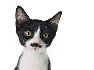 Cute Black And White Kitten With A Mustache-Hannamariah-Photographic Print