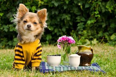 Cute Chihuahua Dog At The Picnic In Summer Garden-vitalytitov-Photographic Print