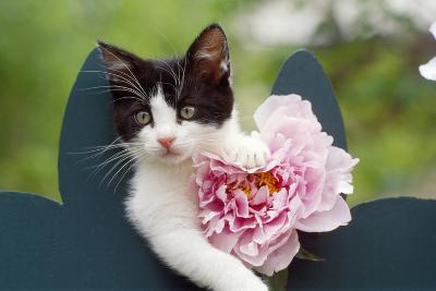 Cute Kitten with Pink Flower--Photographic Print