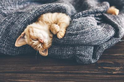 Cute Little Ginger Kitten is Sleeping in Soft Blanket on Wooden Floor-Alena Ozerova-Photographic Print