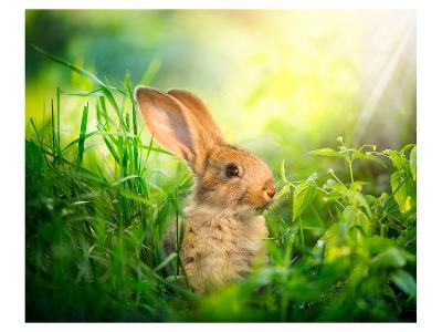 Cute Little Sunny Easter Bunny--Art Print