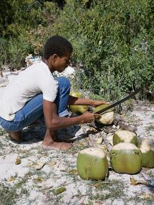 Cutting Coconuts, Barbuda