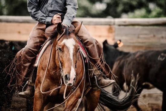 Cutting Horse-Lisa Dearing-Photographic Print