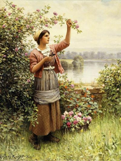 Cutting Roses Along the Seine-Daniel Ridgway Knight-Giclee Print
