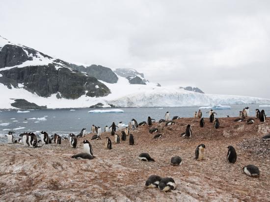 Cuverville Island, Antarctic Peninsula, Antarctica, Polar Regions-Robert Harding-Photographic Print