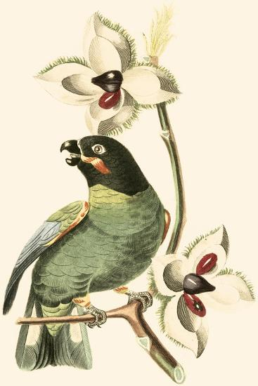 Cuvier Exotic Birds III-Georges Cuvier-Art Print