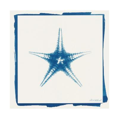 Cyan Starfish-Christine Caldwell-Premium Giclee Print