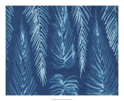 Cyanotype No.7-Renee W^ Stramel-Giclee Print