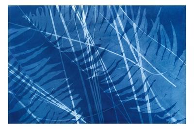 https://imgc.artprintimages.com/img/print/cyanotype-tropical-xi_u-l-q1gvtpf0.jpg?p=0