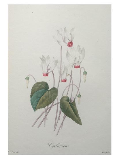 Cyclamen-Pierre-Joseph Redoute-Art Print