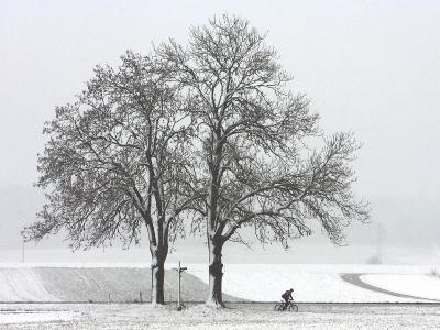 Cyclist Passes a Tree Covered with Snow, Southern Germany--Photographic Print