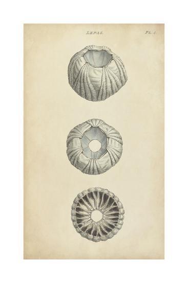 Cylindrical Shells I-Wood-Art Print