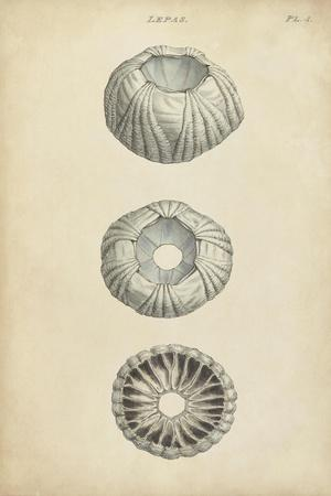 https://imgc.artprintimages.com/img/print/cylindrical-shells-i_u-l-q11jzc50.jpg?p=0