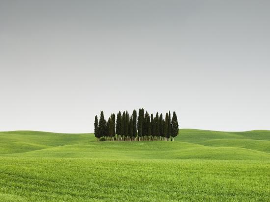 Cypress Grove in Field-Sergio Pitamitz-Photographic Print