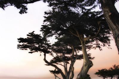 Cypress Silhouette 3-Alan Hausenflock-Photographic Print