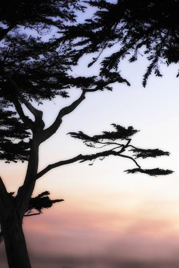 Cypress Silhouette 4-Alan Hausenflock-Photographic Print