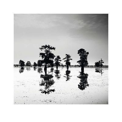 Cypress Swamp V-Josef Hoflehner-Art Print