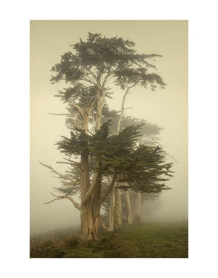 Cypress Symmetry-David Lorenz Winston-Art Print