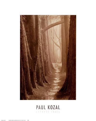 Cypress Trail-Paul Kozal-Art Print