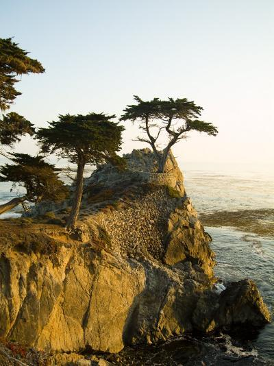 Cypress Tree Along the 17-Mile Drive Outside of Carmel in Monterey County-Richard Nowitz-Photographic Print