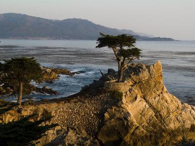 https://imgc.artprintimages.com/img/print/cypress-tree-along-the-17-mile-drive-outside-of-carmel-in-monterey-county_u-l-p8h82w0.jpg?p=0