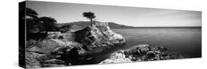 Cypress Tree at the Coast, the Lone Cypress, 17 Mile Drive, Carmel, California, USA