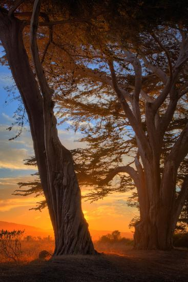 Cypress Tree Sunrise, Glorious Point Reyes National Seashore, California Coast-Vincent James-Photographic Print