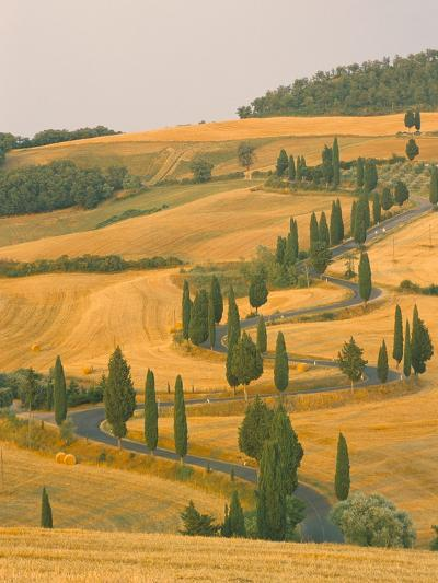 Cypress Trees Along Rural Road Near Pienza, Val D'Orica, Siena Province, Tuscany, Italy, Europe-Sergio Pitamitz-Photographic Print